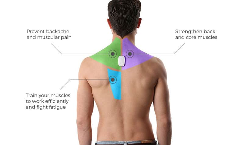 upright go back muscle diagram explains benefits