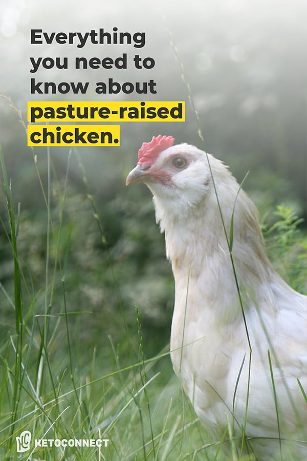 chicken with text overlay of everything you need to know about pasture raised chickens
