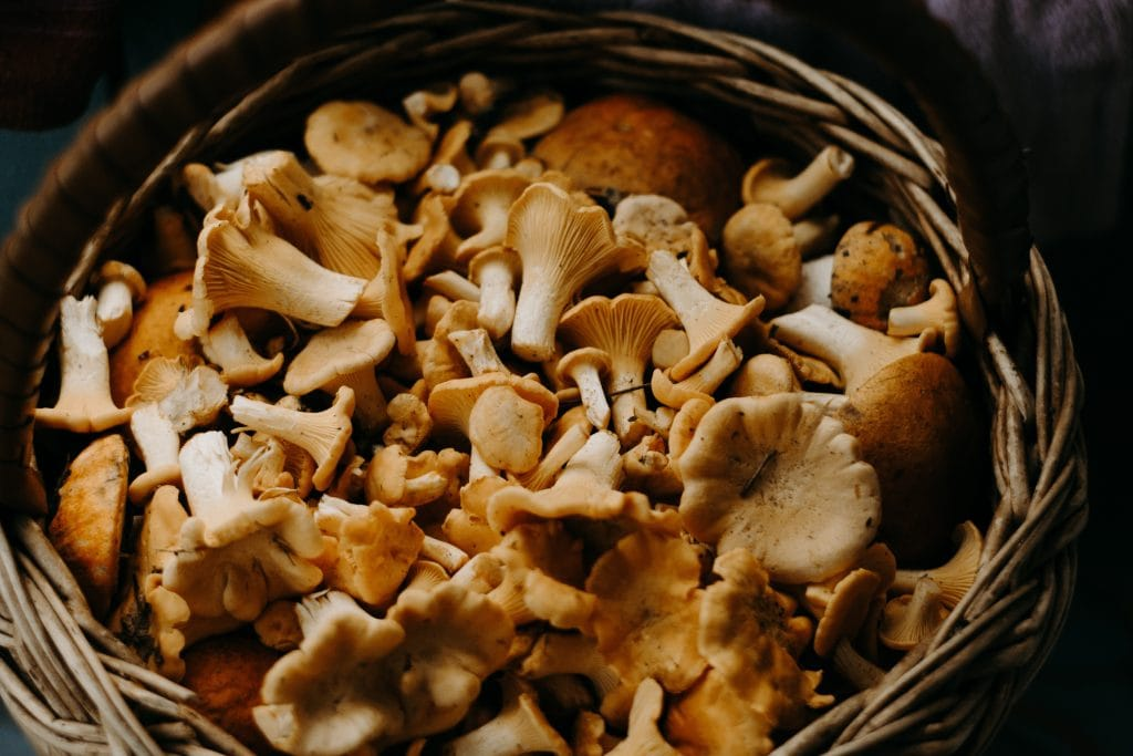 wild mushrooms after being foraged for